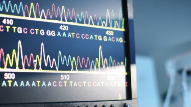 Signature In The Pseudogenes Articles BioLogos