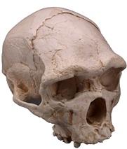 Figure 12: Arago