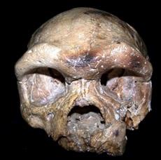 Figure 2: Dali Cranium