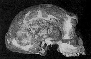 Figure 3: Jinniushan (From Tiemei et al. 1994)