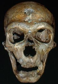 Figure 2: The Neandertal from La Chapelle-aux-Saints