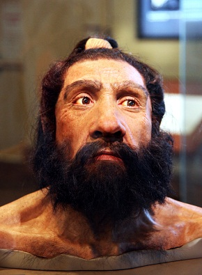 A model of an adult Neanderthal male head and shoulders on display in the Hall of Human Origins in the Smithsonian Museum of Natural History in Washington, D.C. Reconstruction based on the Shanidar 1 fossil (c. 80-60 kya).