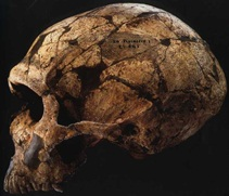 Figure 5: The La Ferrassie 1 Neandertal