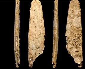 Figure 8: Neandertal-Made Bone Lissoirs