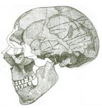 Figure 5: Skhul IV