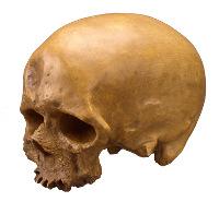 Figure 7: Cro Magnon 1