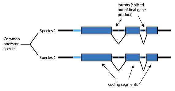Figure: Junk DNA