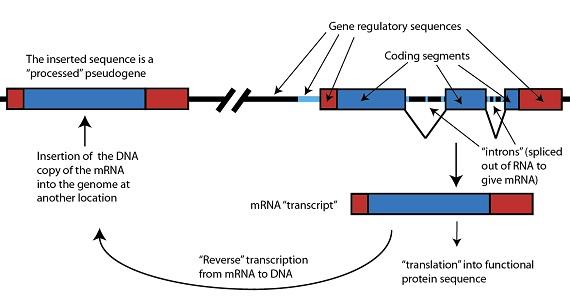 Figure 5: Junk DNA