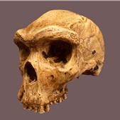 Figure 2: Kabwe (Cast)