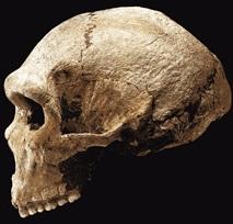Figure 9: Petralona (Photograph by David Brill)
