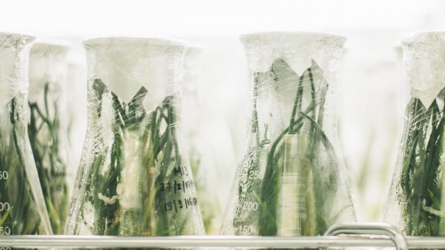 plants growing in different beakers