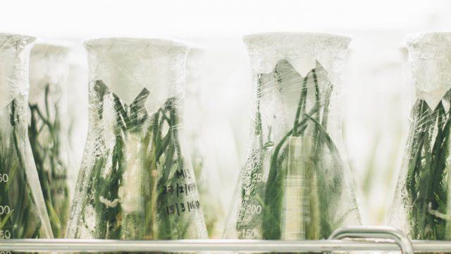 plants growing in different beakers