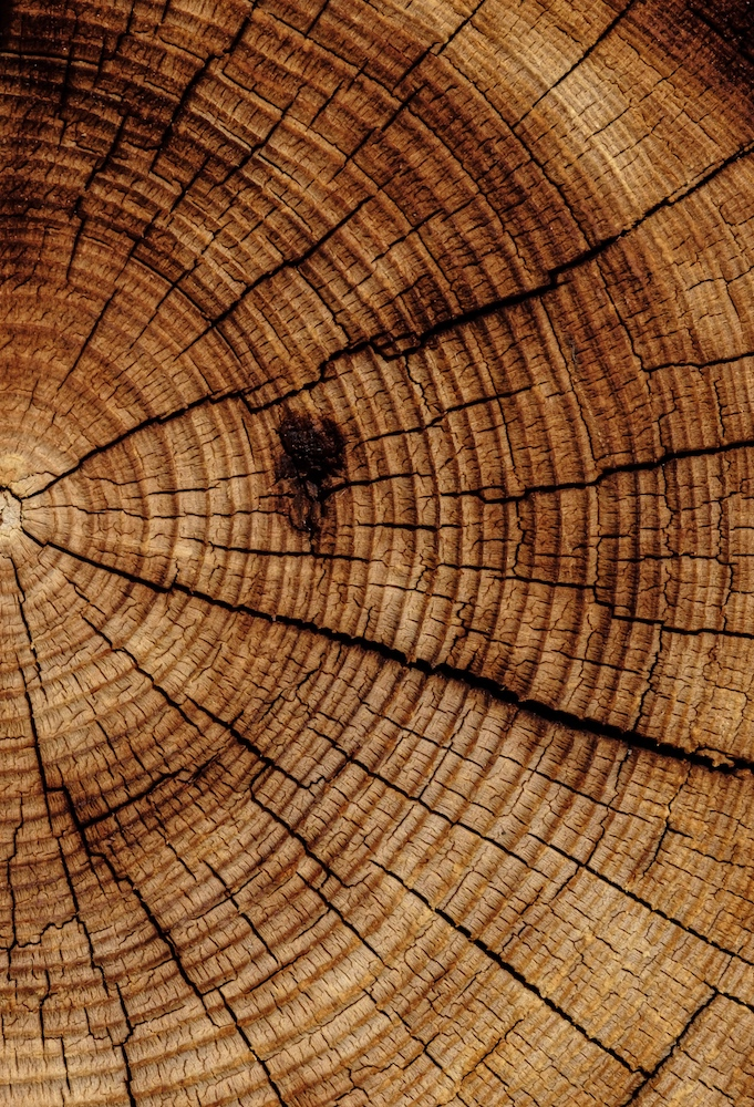 a cut tree displaying its rings