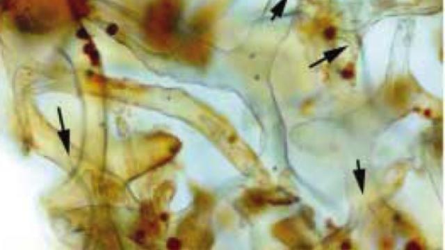 Evidence in soft the tissue hardens dinosaur fossils Scientist dismissed