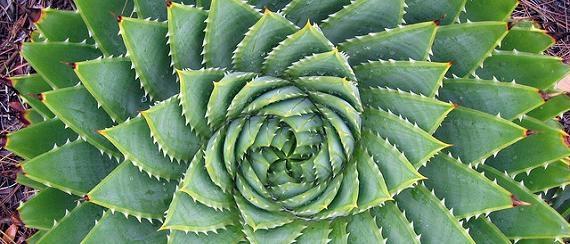 cactus_fibonacci