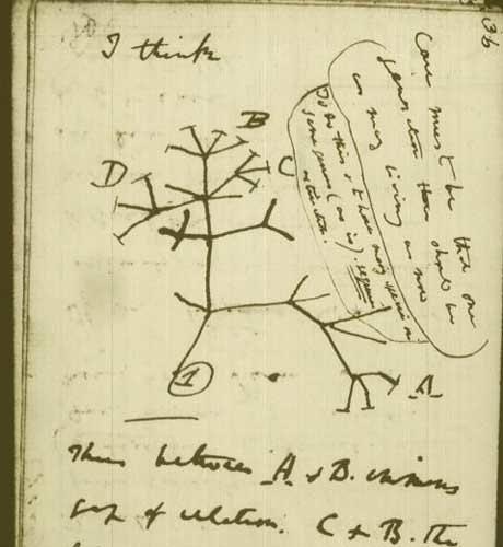 tree of life darwin