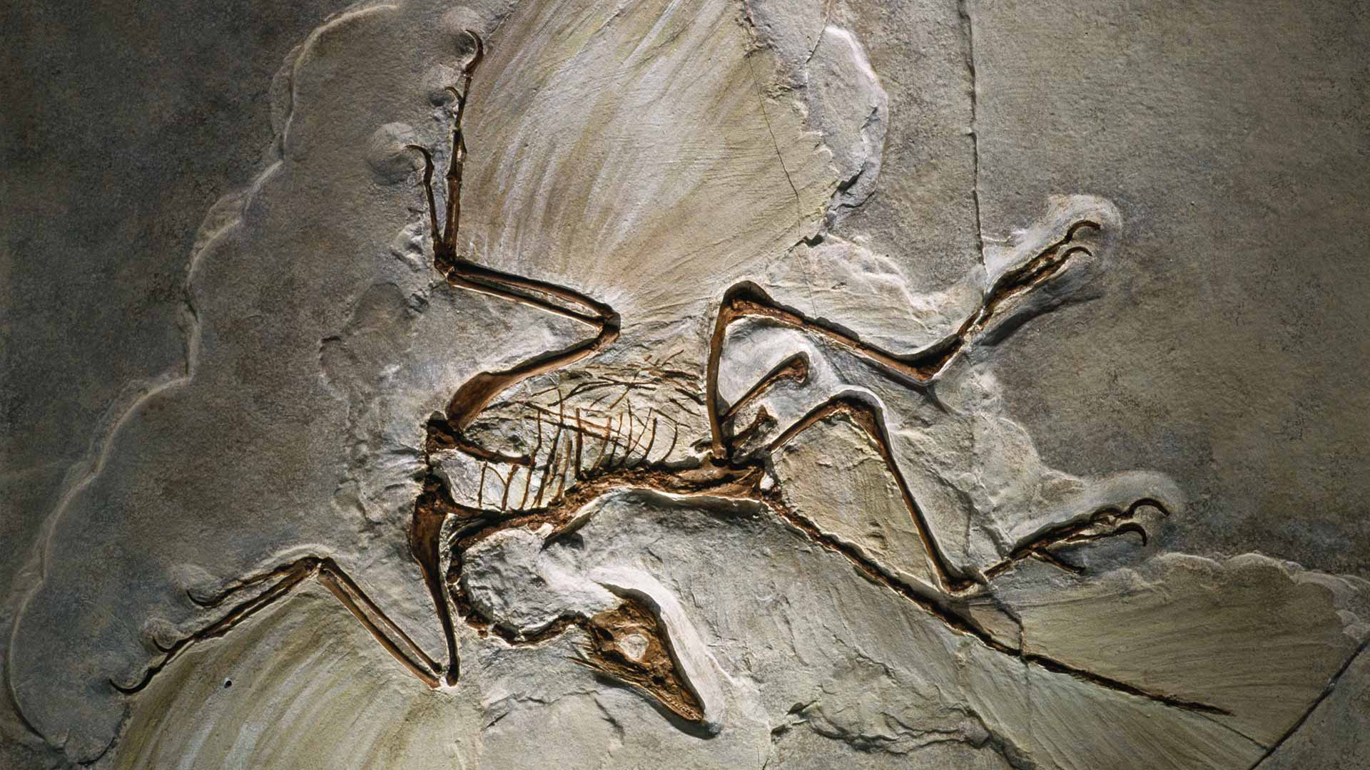 What Does The Fossil Record Show Common Questions Biologos