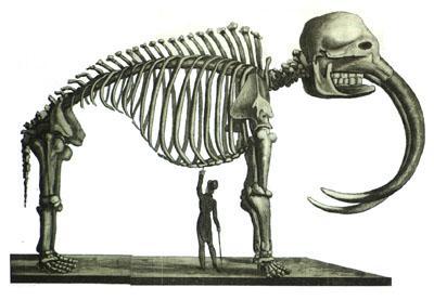 edouad de montule mastodon in philadelphia