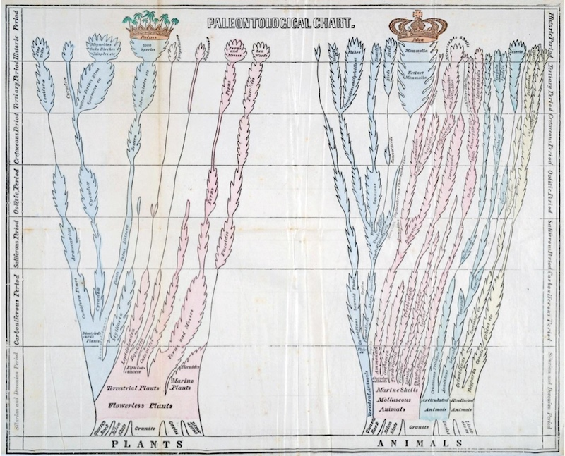 paleontological chart