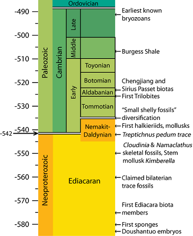 Cambrian Timeline