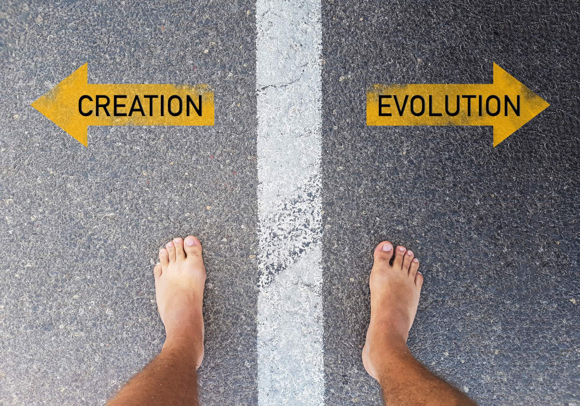 What is Evolutionary Creation? - Common-questions - BioLogos