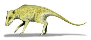 Artist's depiction of Indohyus