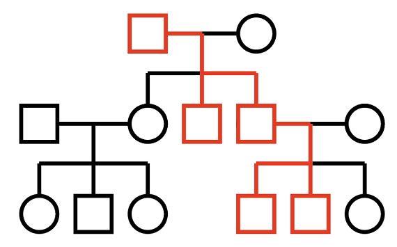 Diagram: Y-chromosome inheritance