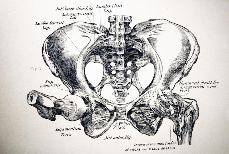 pelvic bones diagram