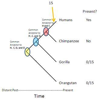 Diagram: Pseudogenes