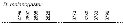 Synteny diagram