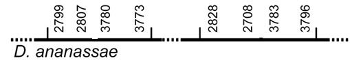 Diagram: synteny