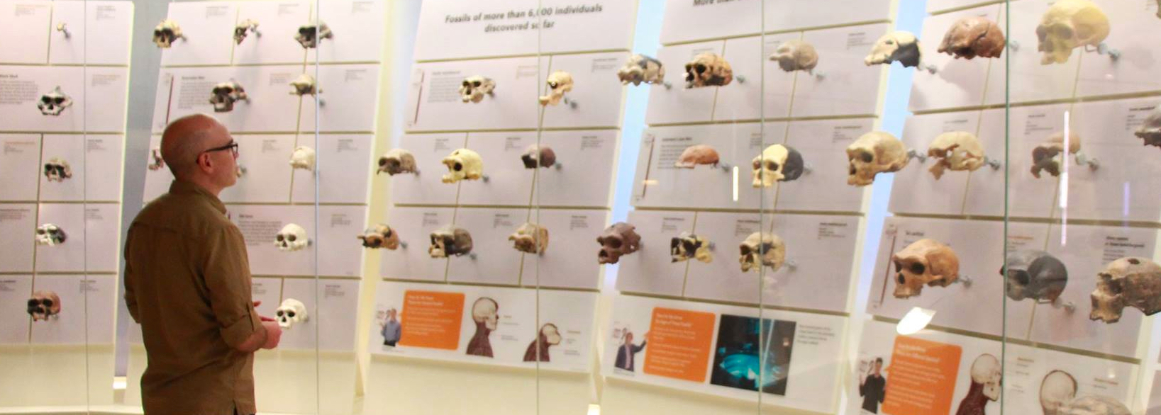 Jim looking at skulls in the Hall of Human Origins at the Smithsonian