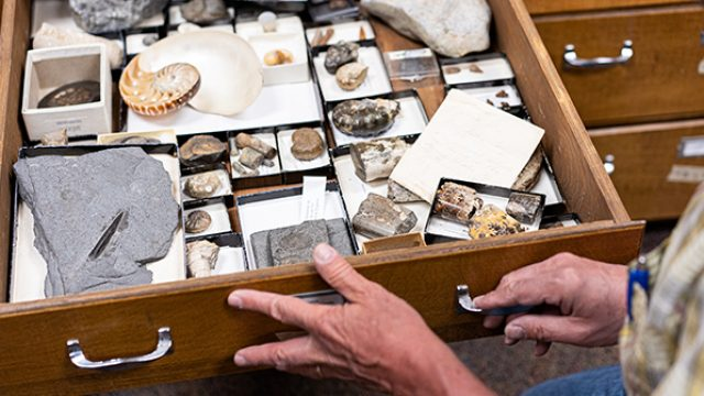 Fossils in drawer