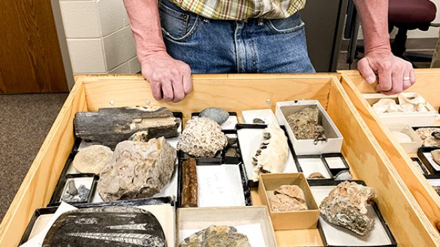 Drawer of Fossils