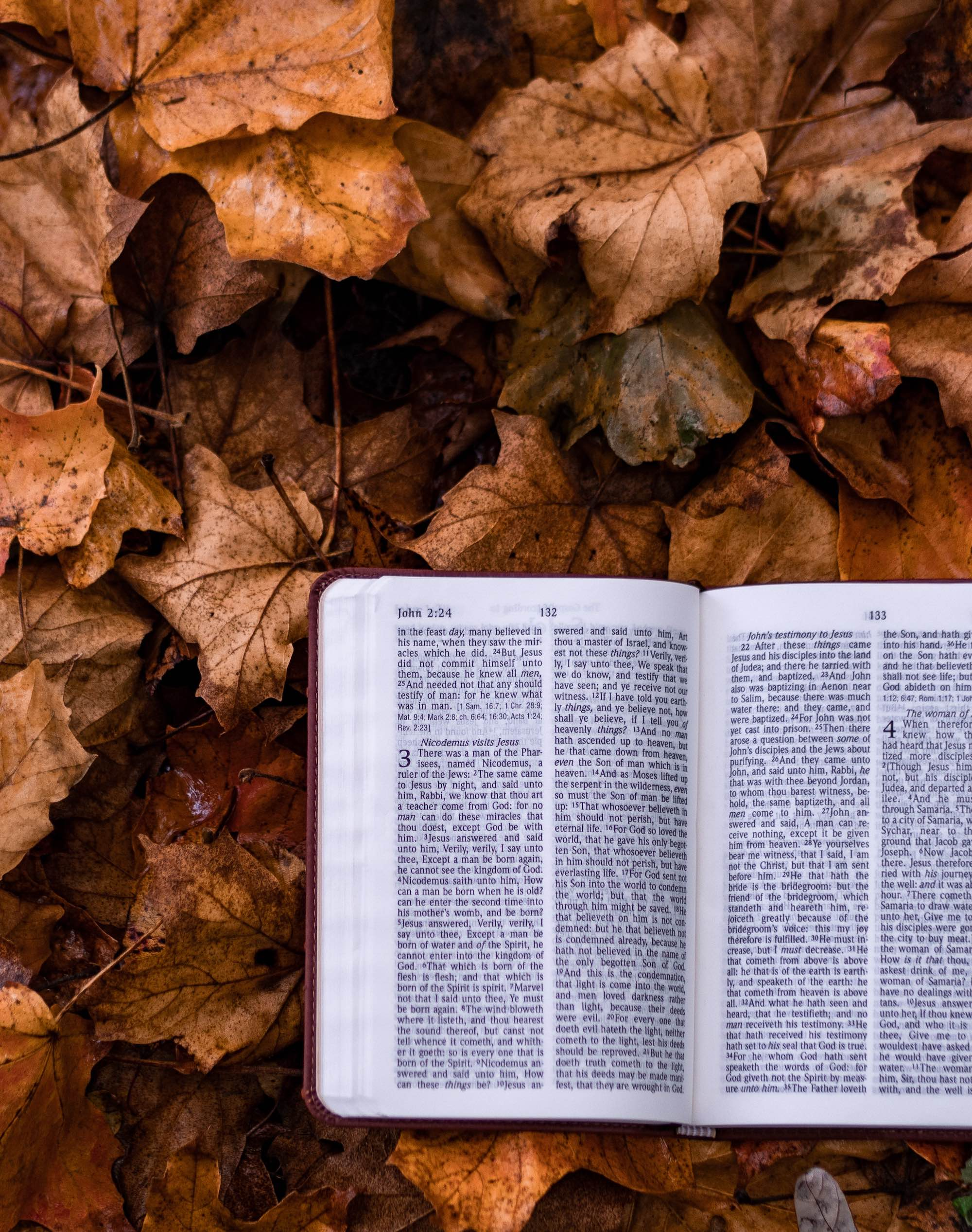 bible open to John on crunchy brown leaves