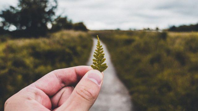 hand holding fern leaf