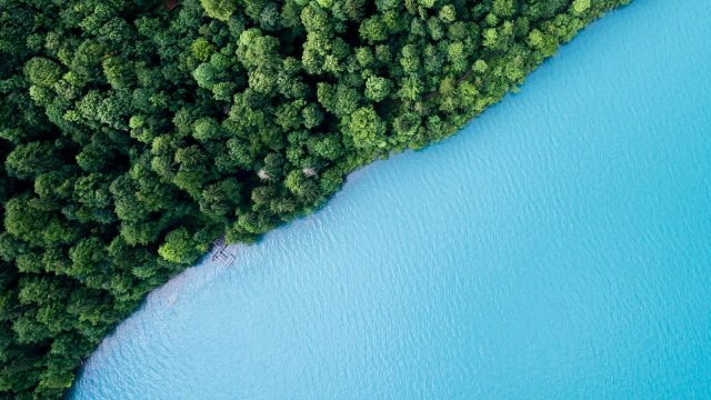 sharp aerial divide between bright blue water and green trees
