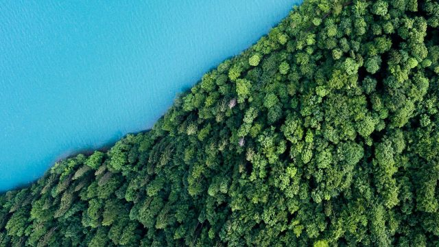 sharp aerial divide between blue water and green trees