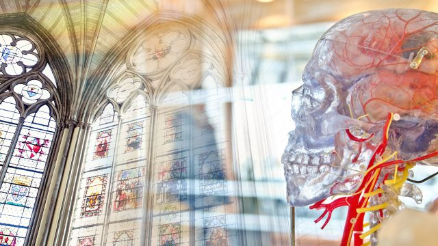 stained glass window blended with picture of scientific model of human skull