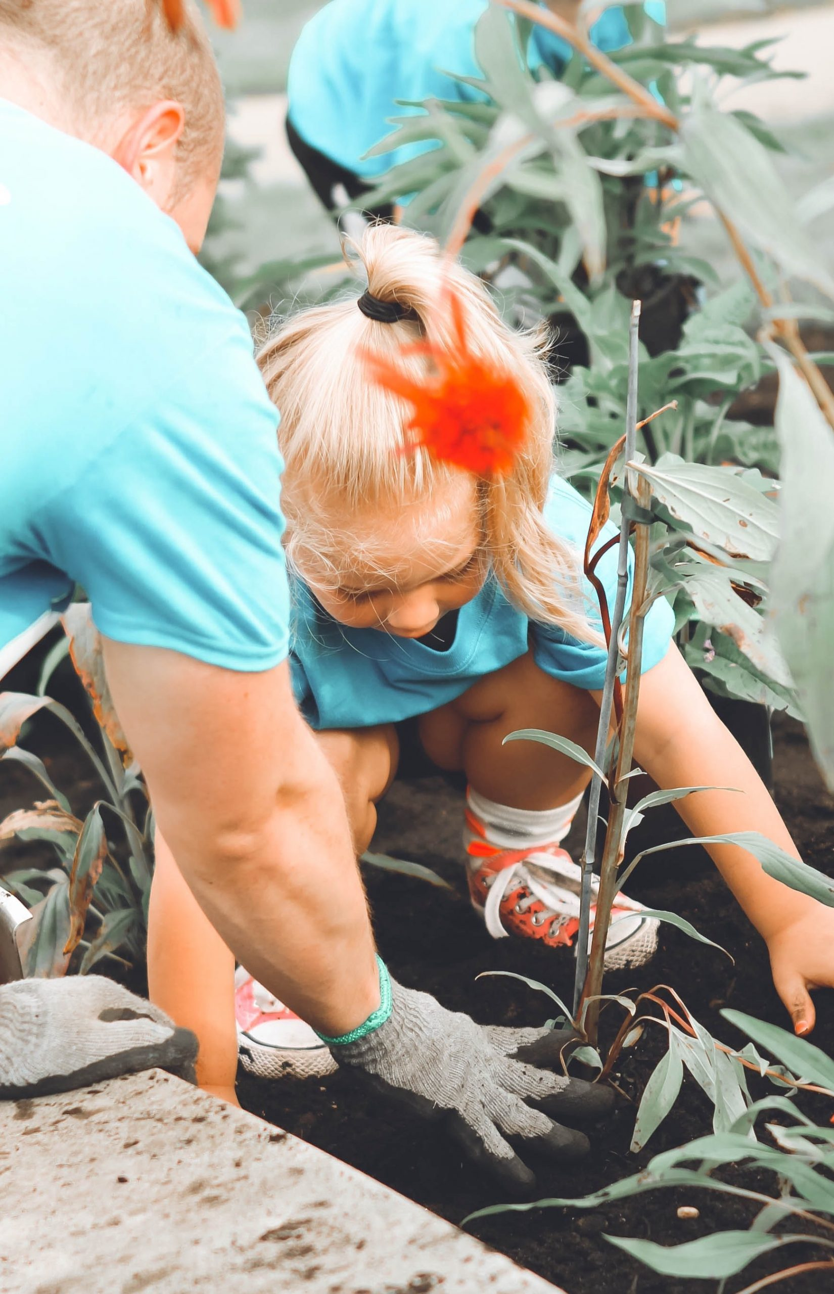 little girl planting in a garden with an adult