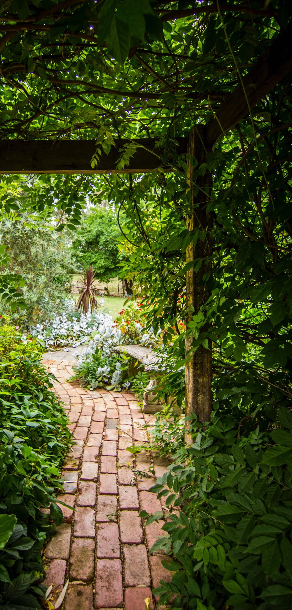 a paved path leading through a garden