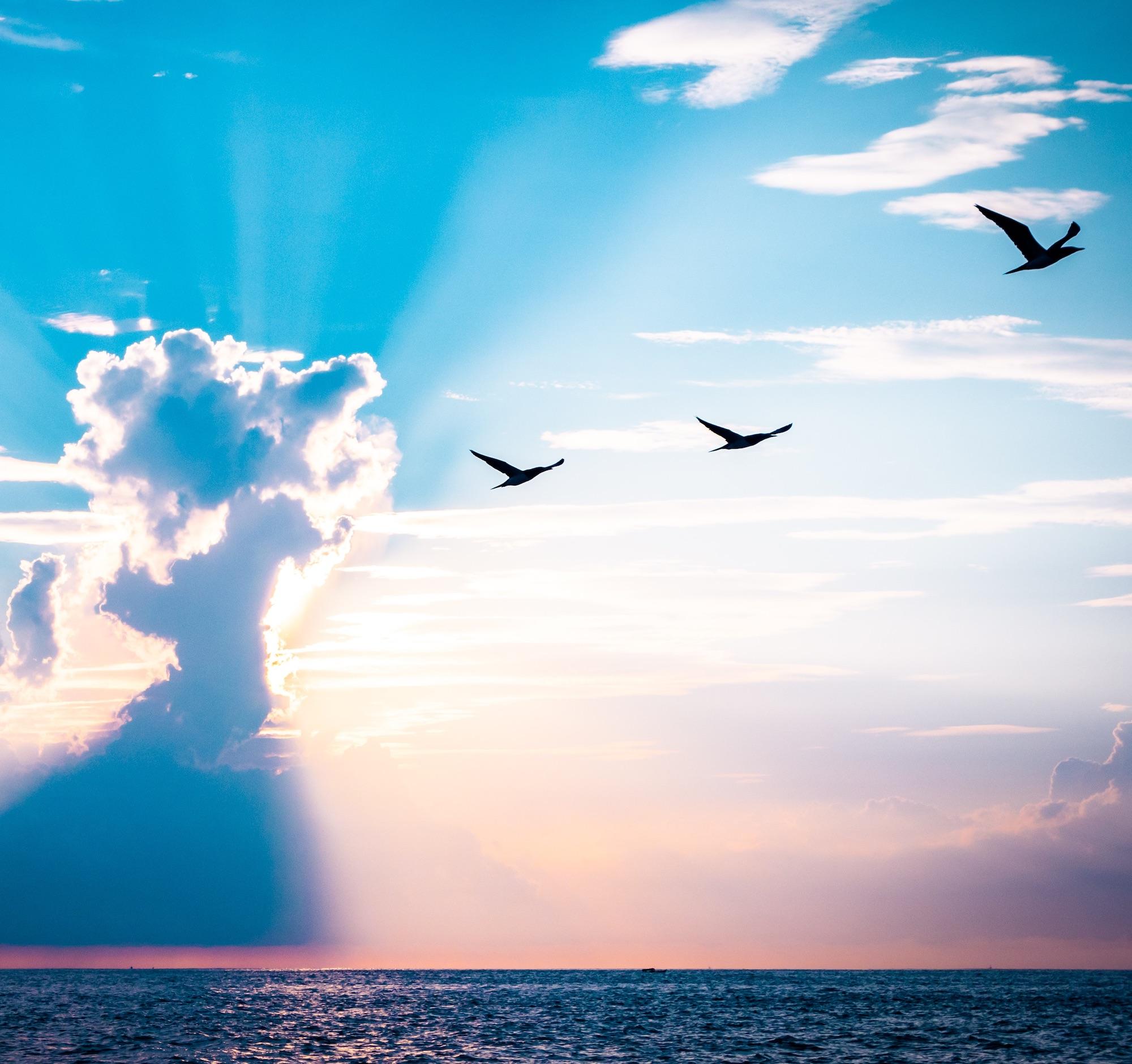 sky over ocean with birds flying towards sun