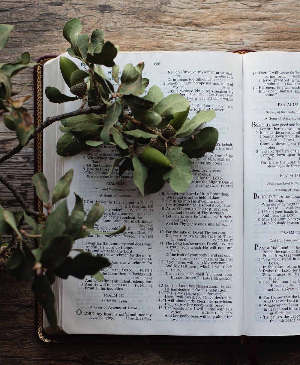 bible open with greenery laying across the pages