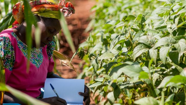 Climate-smart soils: testing soil health in Western Kenya.
