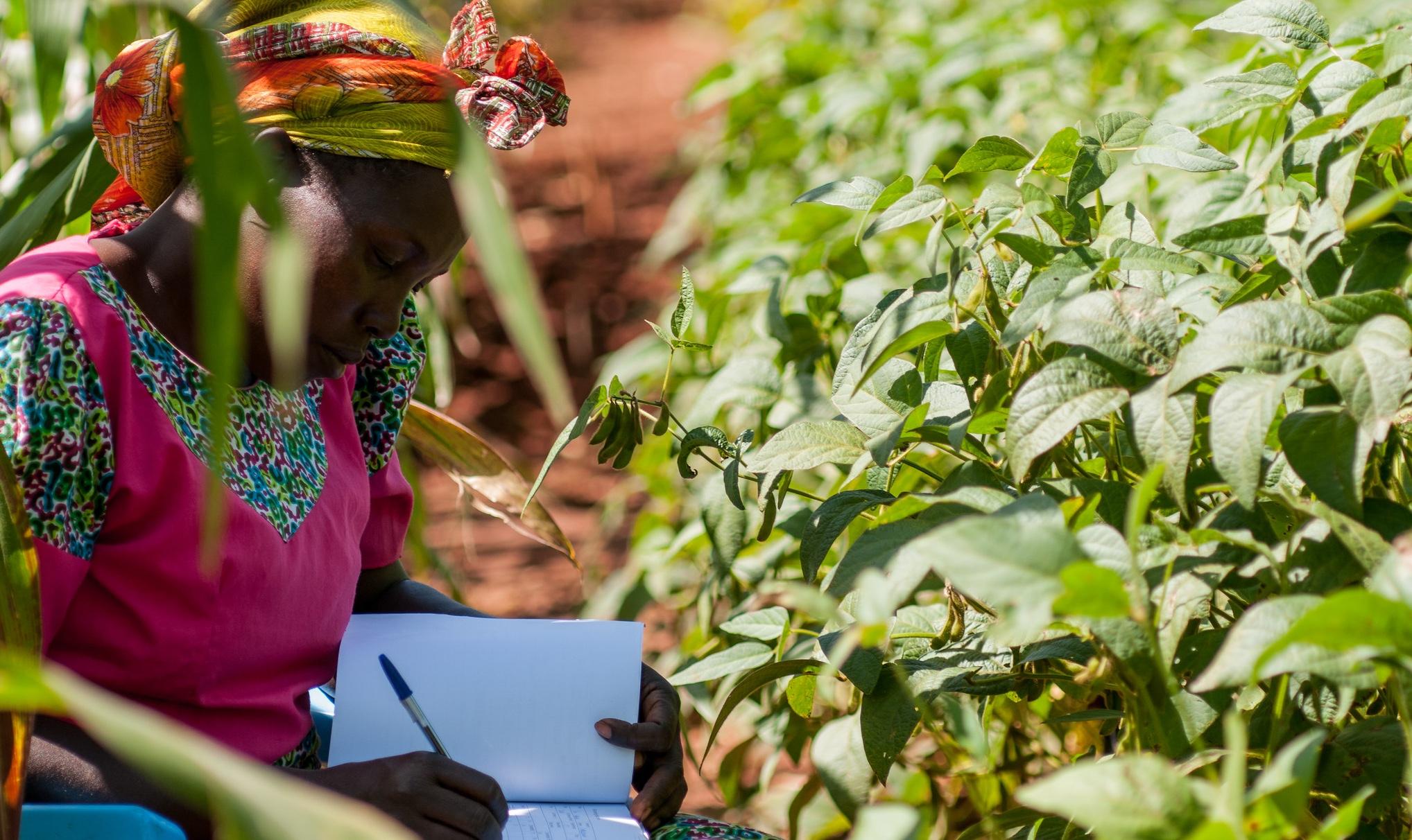 Climate-smart soils: testing soil health in Western Kenya.