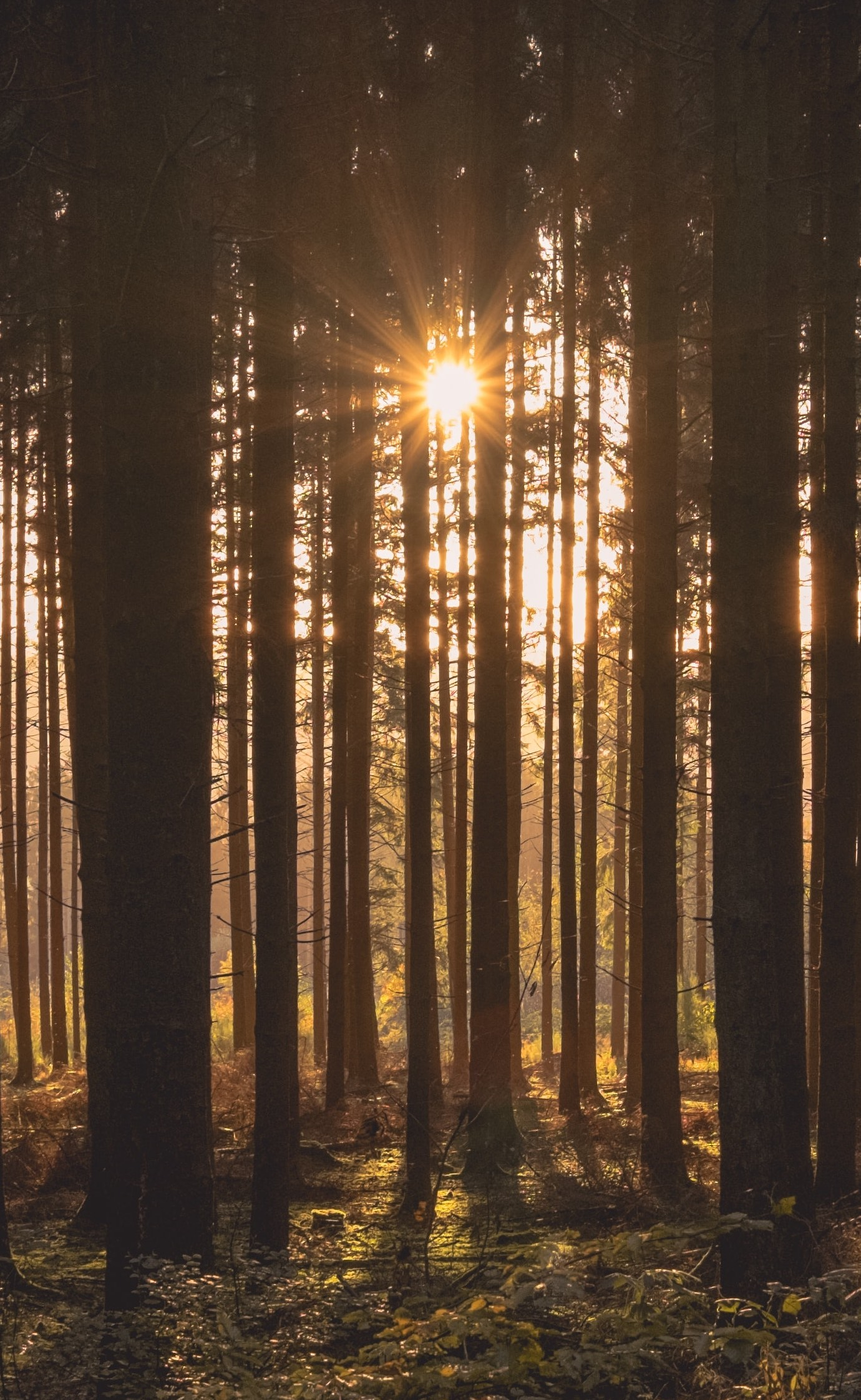 the sun shining through trees in a forest