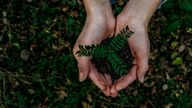 hands holding a seedling in dirt