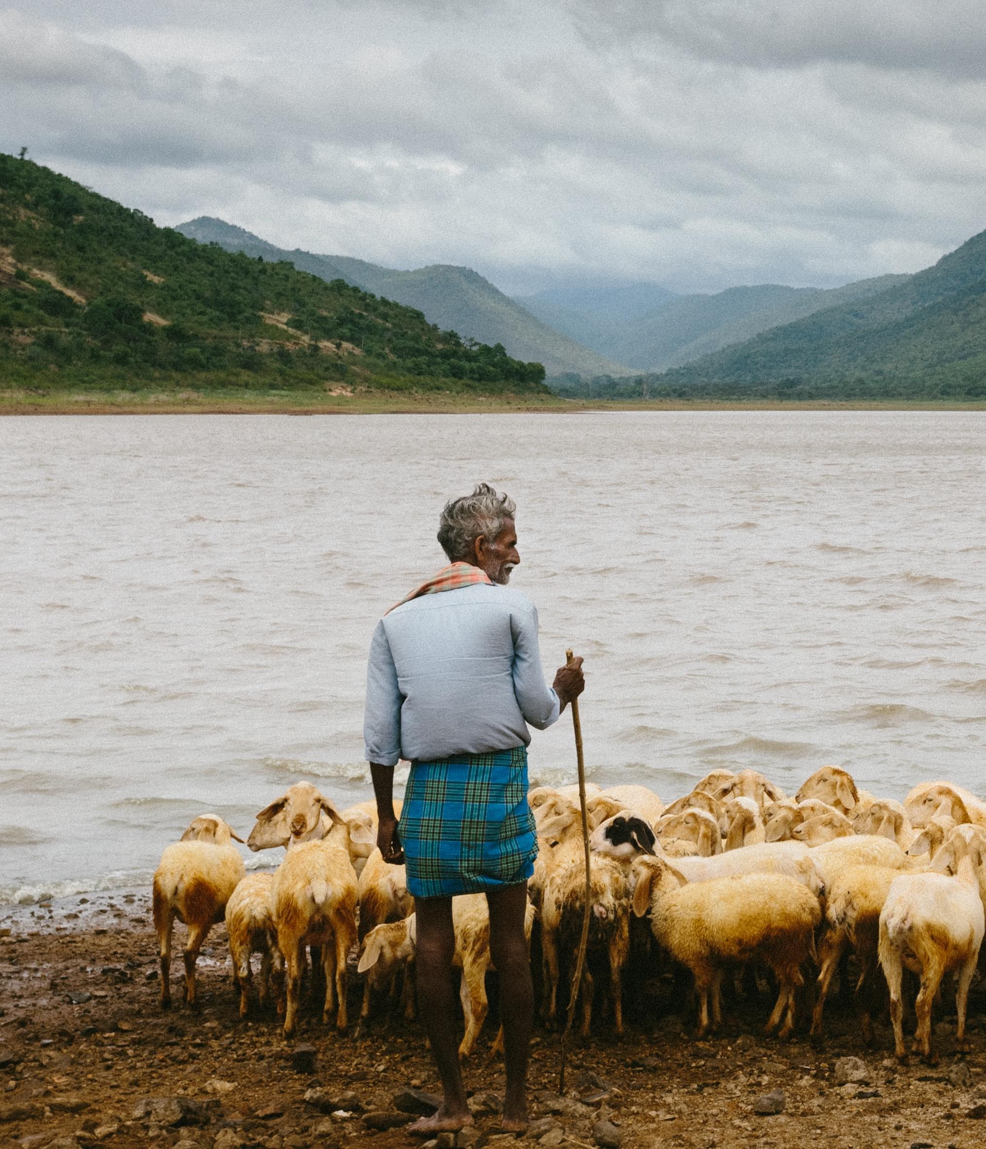 shepherd standing at water's edge with sheep