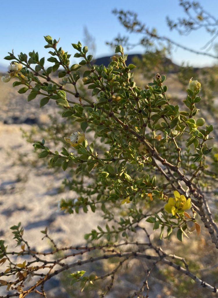 green plant with yellow buds